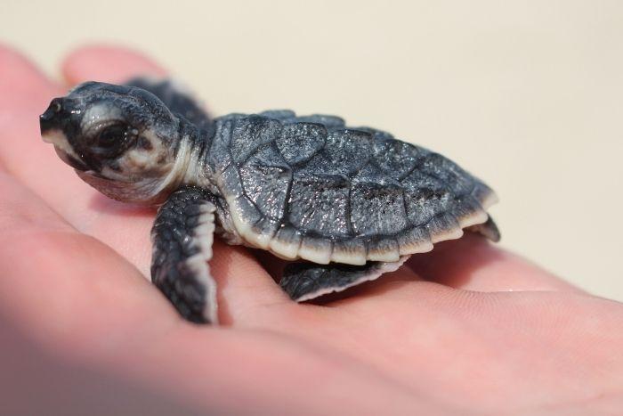 Turtles of Al Dhafra
